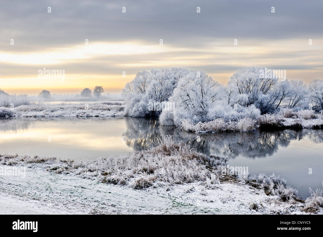 Elbe landscape covered with hoar frost, Germany, Kirchwerder, Hamburg - Stock Image