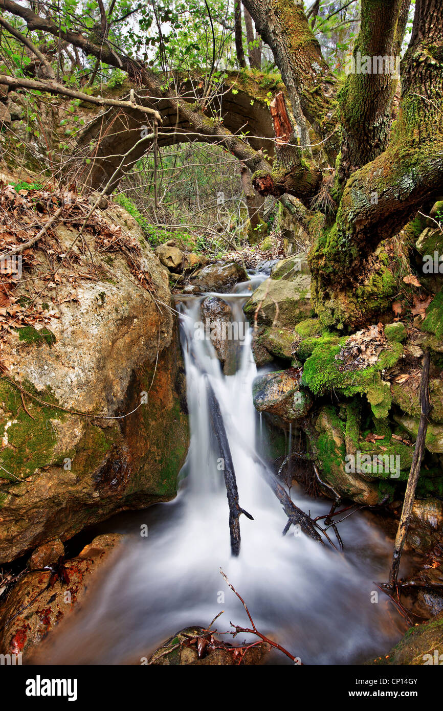 Walking in the gorge of Kambia, the most beautiful trail, on the north part of Chios island, Northeast Aegean, Greece - Stock Image