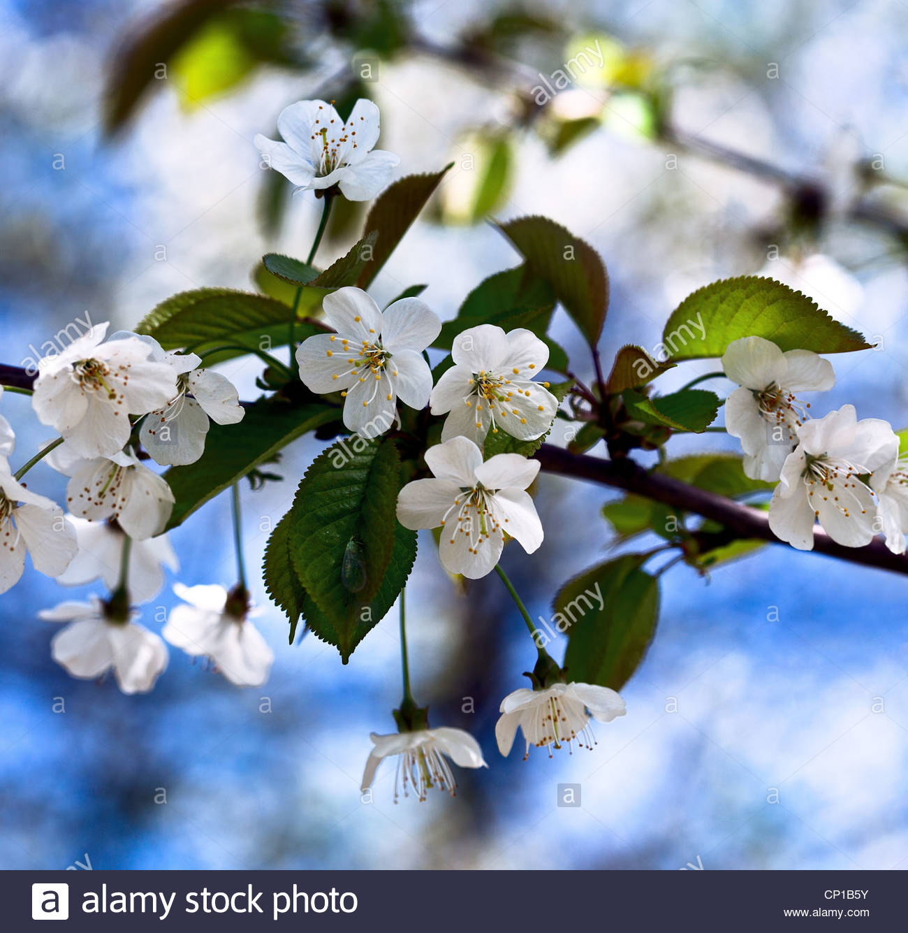 What is white flower image collections flower decoration ideas what is white flower choice image flower decoration ideas what is white flower gallery flower decoration mightylinksfo