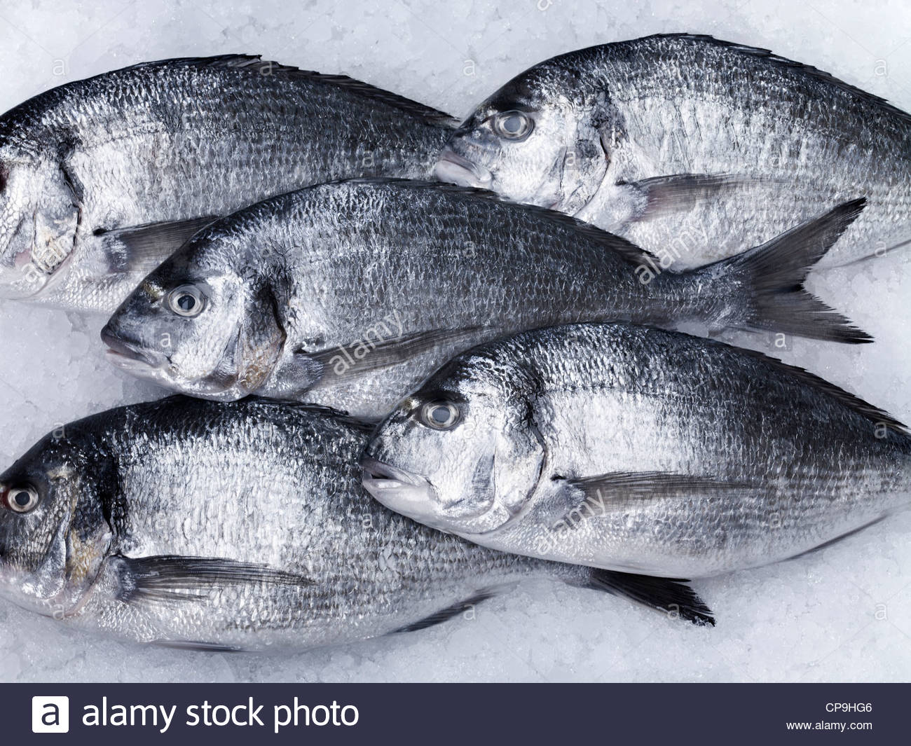 animals,close up,color image,cooling,dead fish,fish,fish on ice,five animals,five objects,formation,fresh,healthy - Stock Image