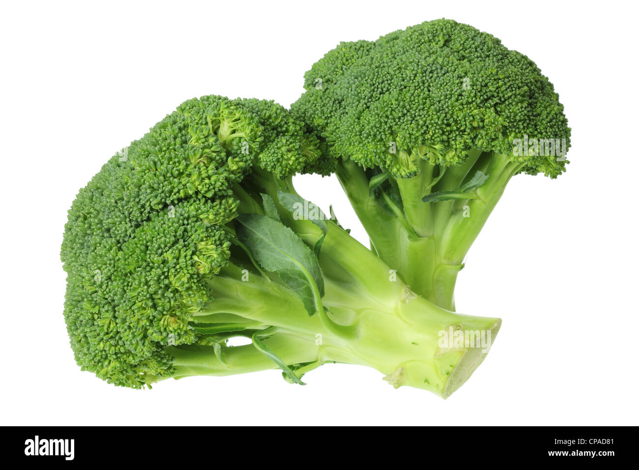 Broccoli Stock Photo