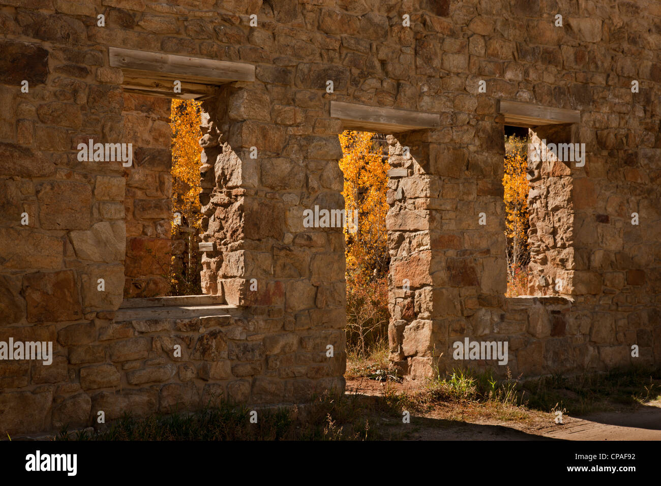 USA, Colorado, Central City. Aspen trees inside abandoned stone building.   Credit as - Stock Image