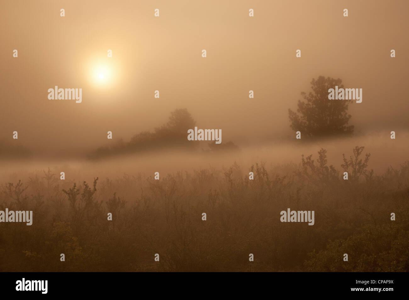 USA, Colorado, Colorado Springs, Palmer Park. The sun penetrates morning fog over field - Stock Image