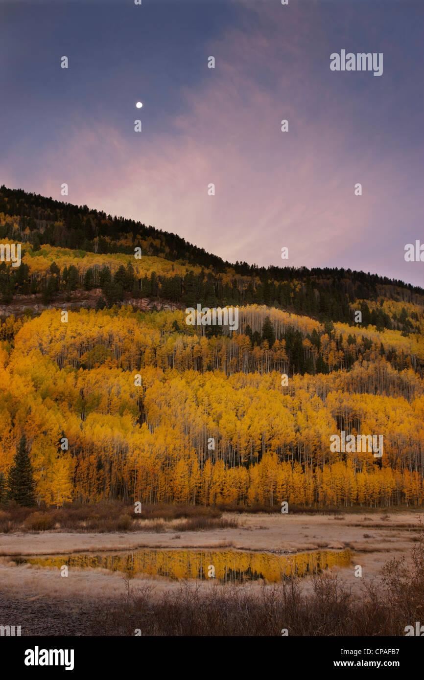 USA, Colorado, San Juan Mountains. Autumn-colored trees reflect in mountain pond at sunrise - Stock Image
