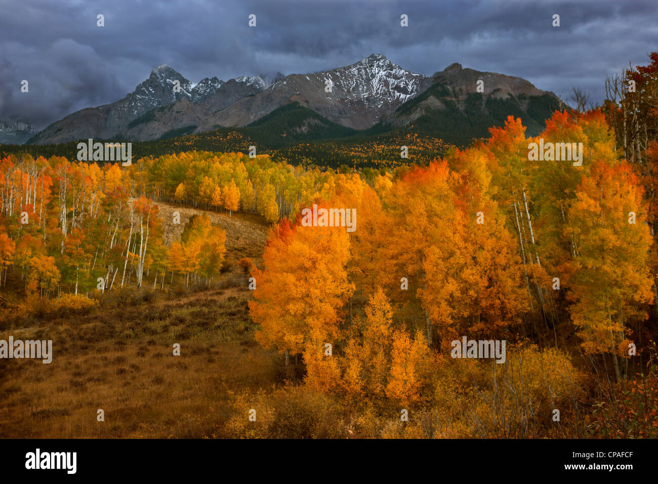 USA, Colorado, Sneffels Range. Dark clouds foretell an autumn storm over fall-covered aspen groves - Stock Image