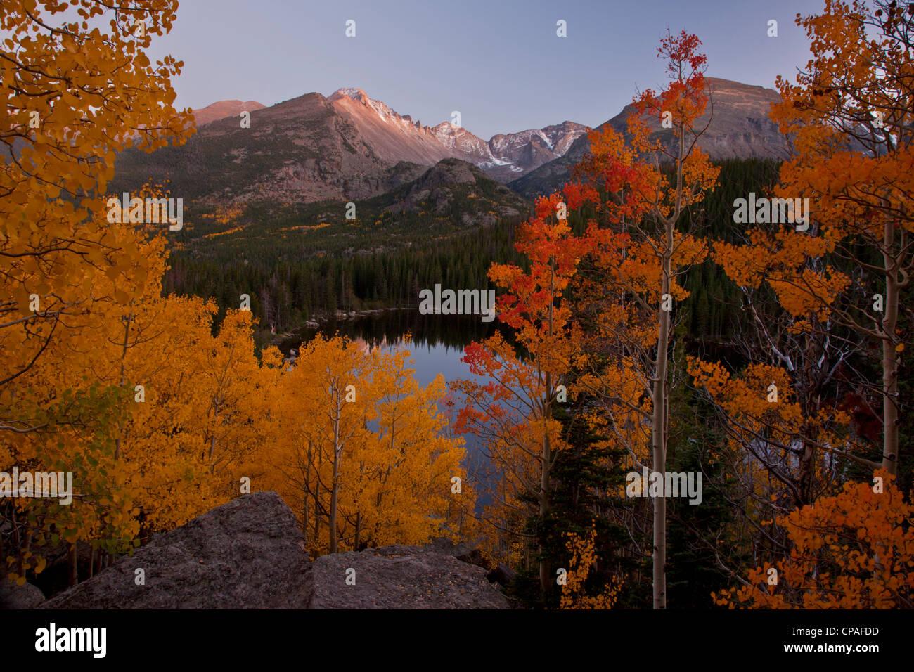 USA, Colorado, Rocky Mountain National Park. Aspen trees in autumn foliage   frame Longs Peak above Bear Lake at - Stock Image