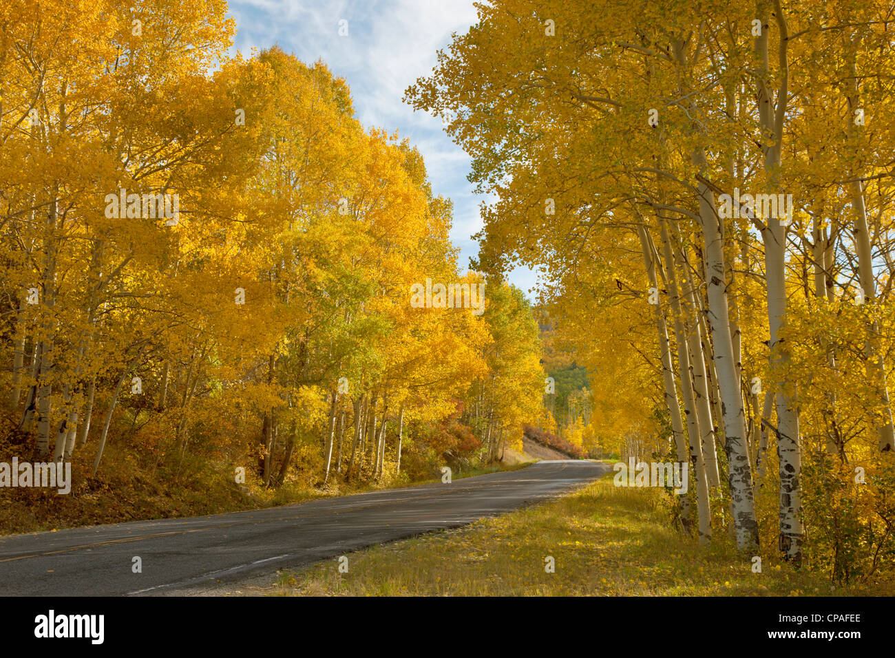 USA, Colorado, Black Canyon of the Gunnison National Park. Colorado Highway 92, winds through groves of fall-colored - Stock Image