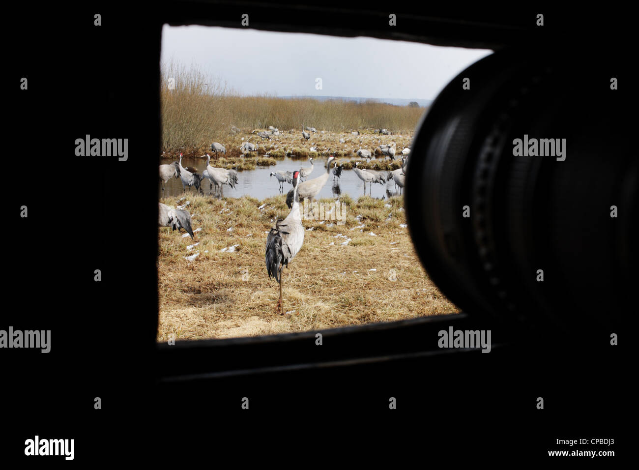 the-view-from-a-photography-hide-at-lake