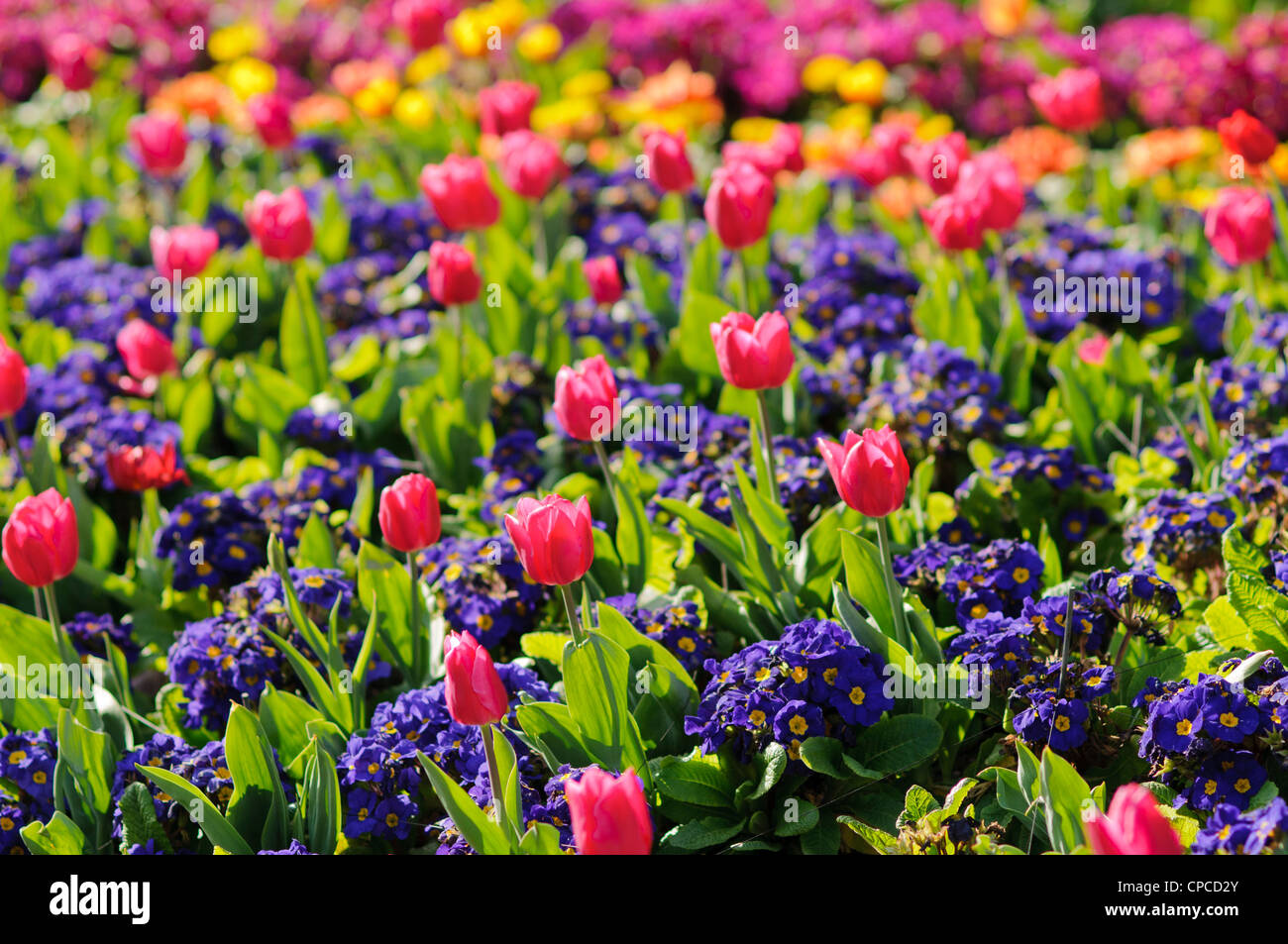 Spring Flowers In St James Park London Stock Photo 48216867 Alamy