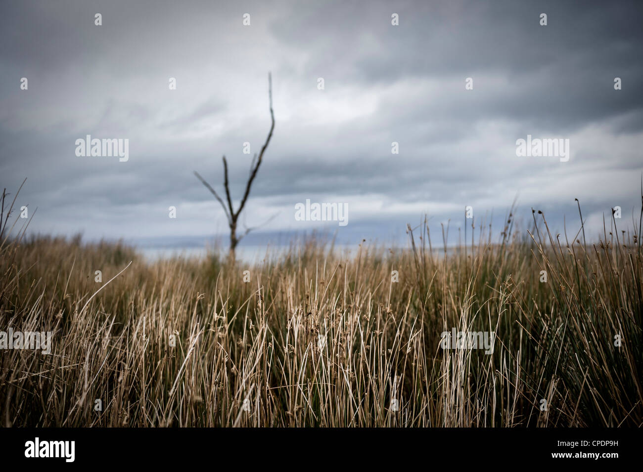 Dead tree and grasses Isle of Skye, Highlands, Scotland, UK - Stock Image