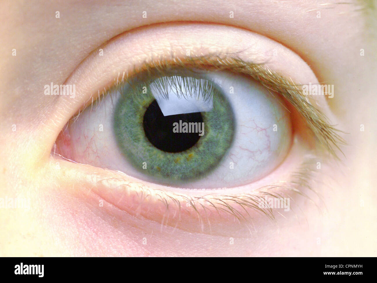 medicine, anatomy, eye of an 8-year-old girl, Germany, color of eyes ...