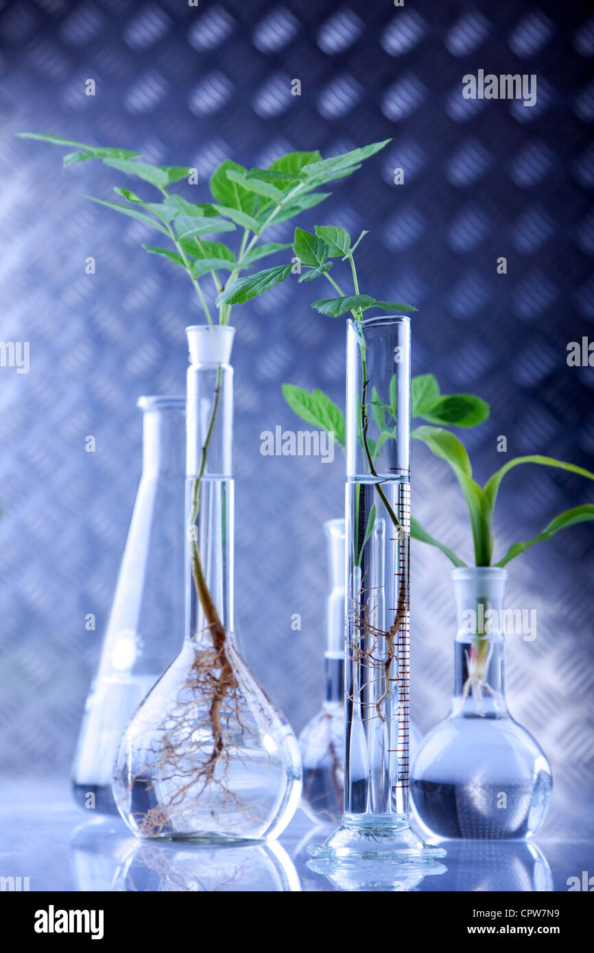 Plants in laboratory - Stock Image
