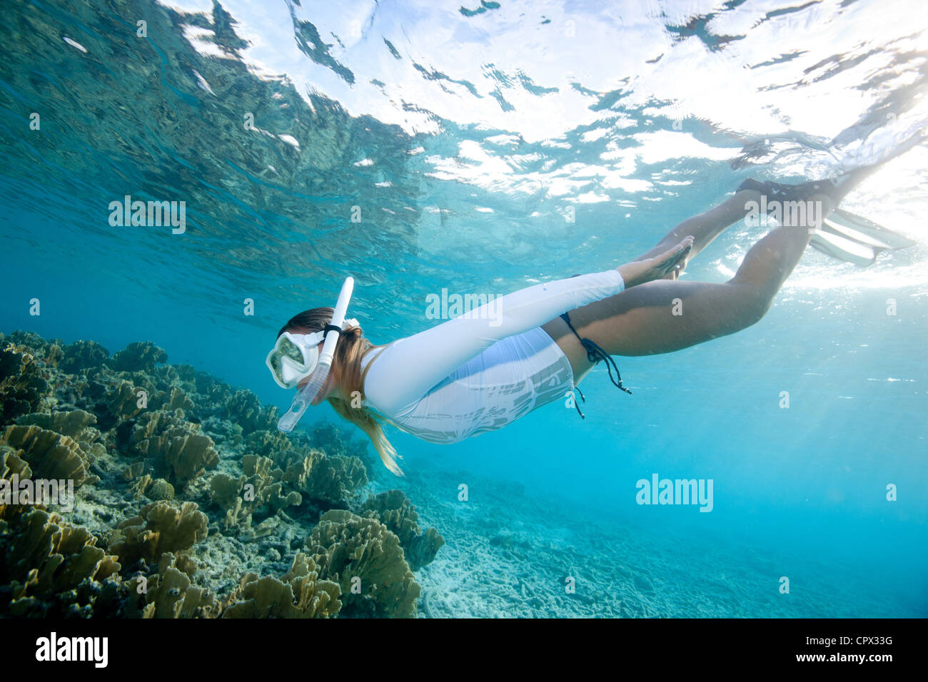 Snorkeler views coral reef - Stock Image