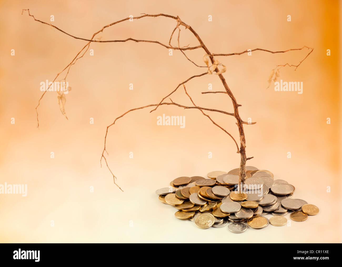 Bad business investment metaphor with withered three and money coins - Stock Image