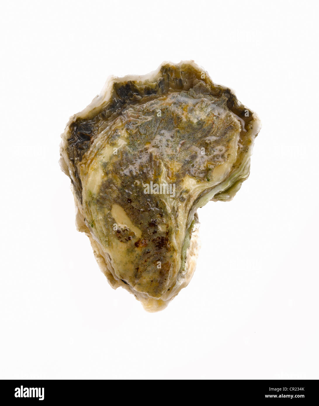 oyster on the half shell Stock Photo