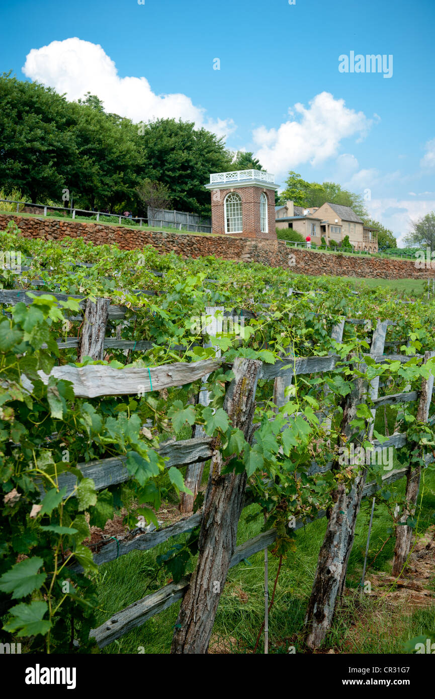 Vineyard of Thomas Jefferson's Monticello estate in Charlottesville VA Stock Photo