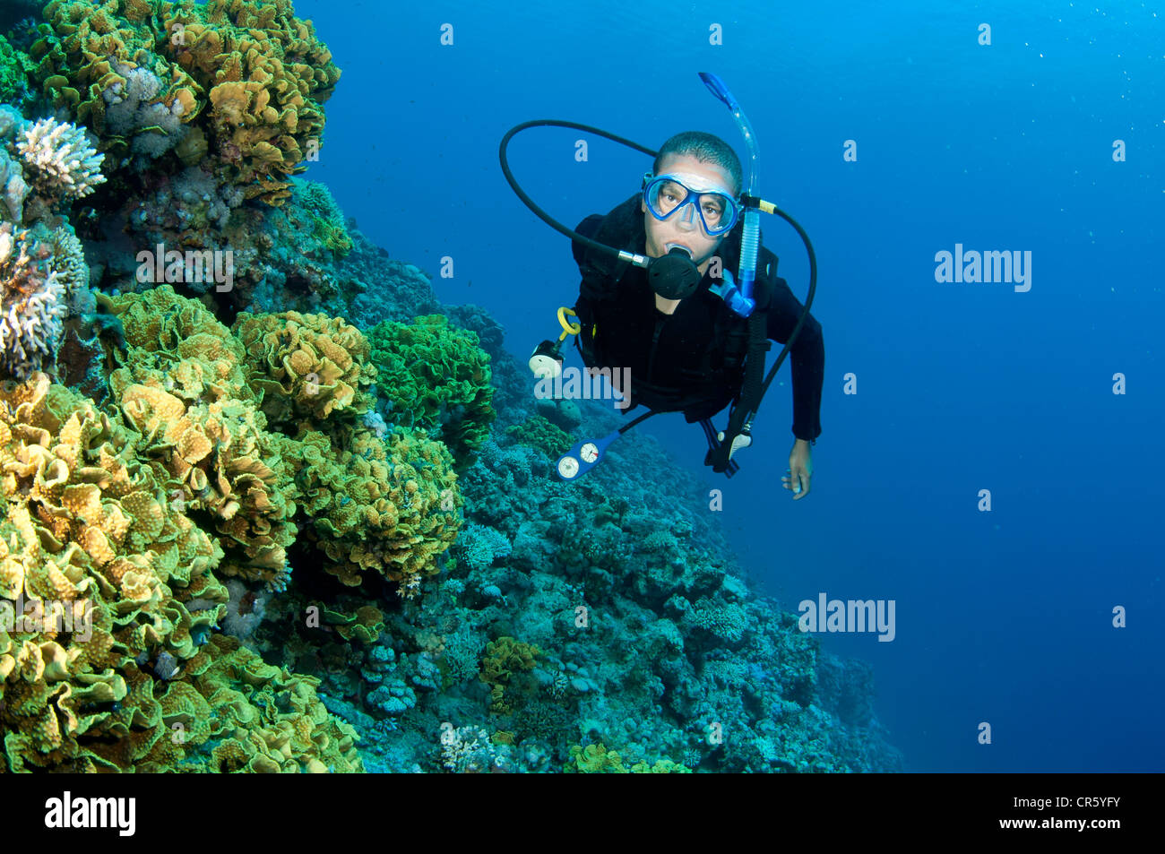 male scuba diver swims in the red sea on a coral reef - Stock Image