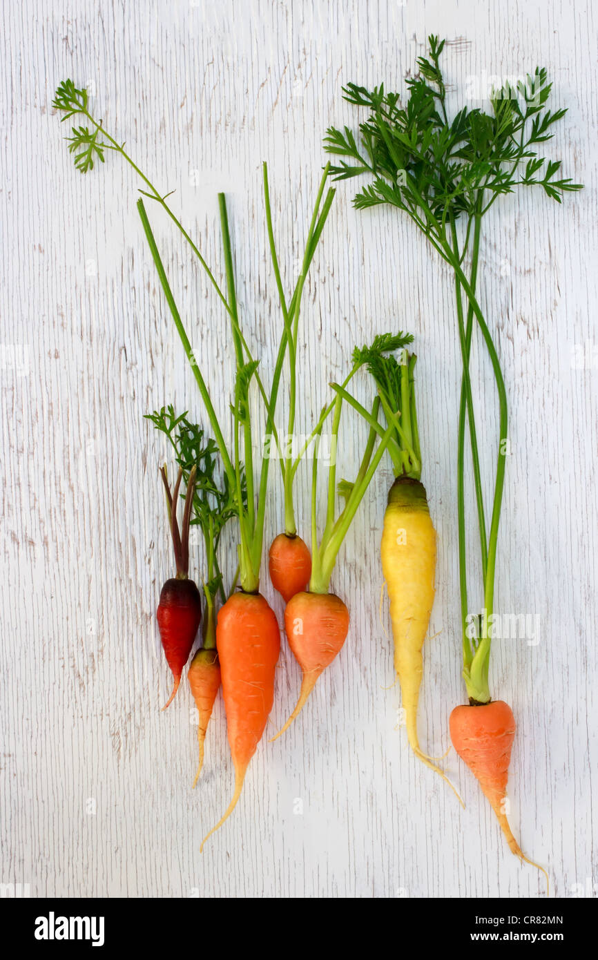 Organic Heirloom Carrots of Assorted Colors - Stock Image