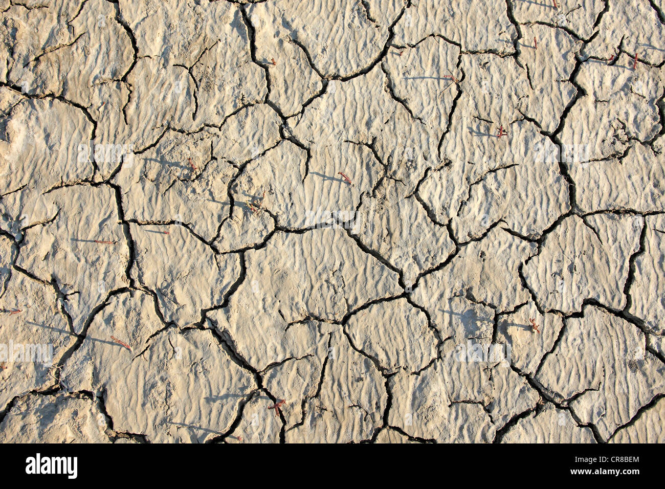 Parched soil surface, Saintes-Marie-de-la-Mer, Bouches du Rhone, Camargue, France, Europe - Stock Image