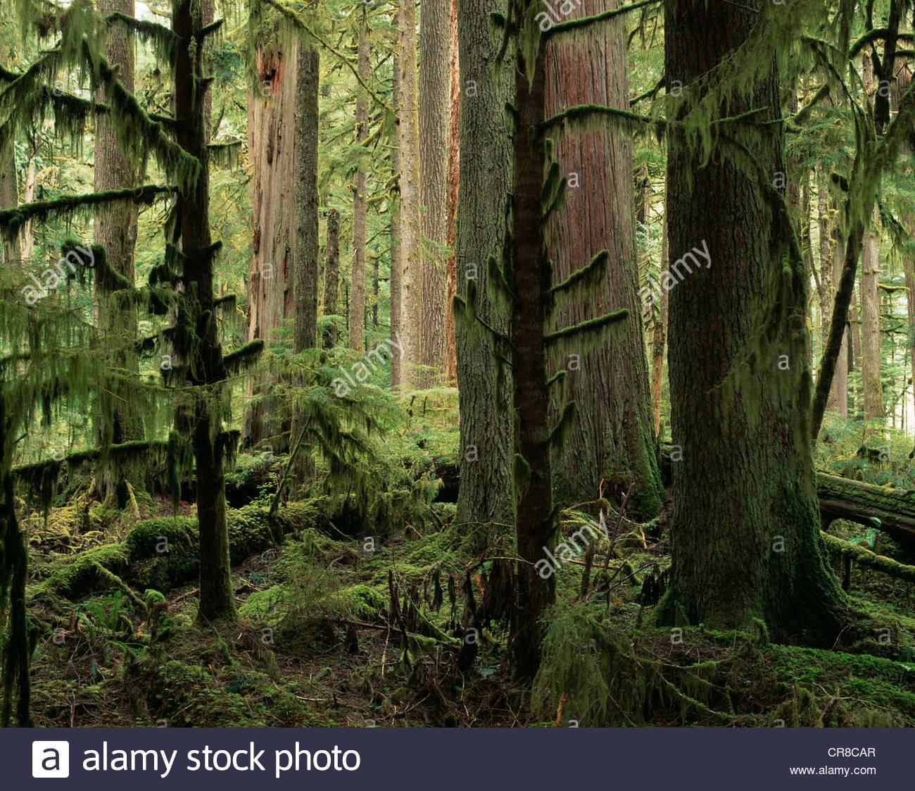 Olympic National Park, Washington - Stock Image
