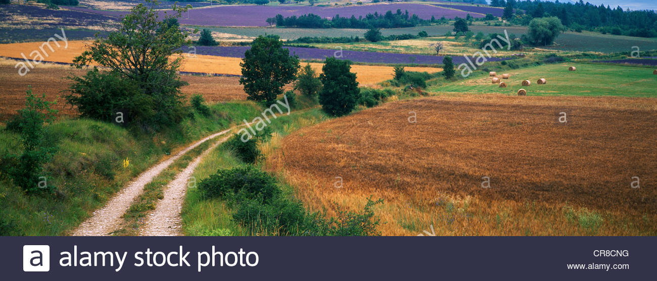 A country lane passes through the rolling hills of Southern France. - Stock Image