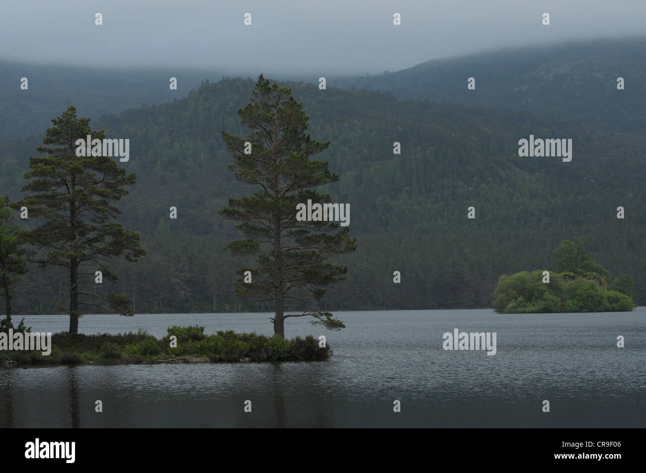 Landscape of tree at Loch an Eilein, Scotland. - Stock Image