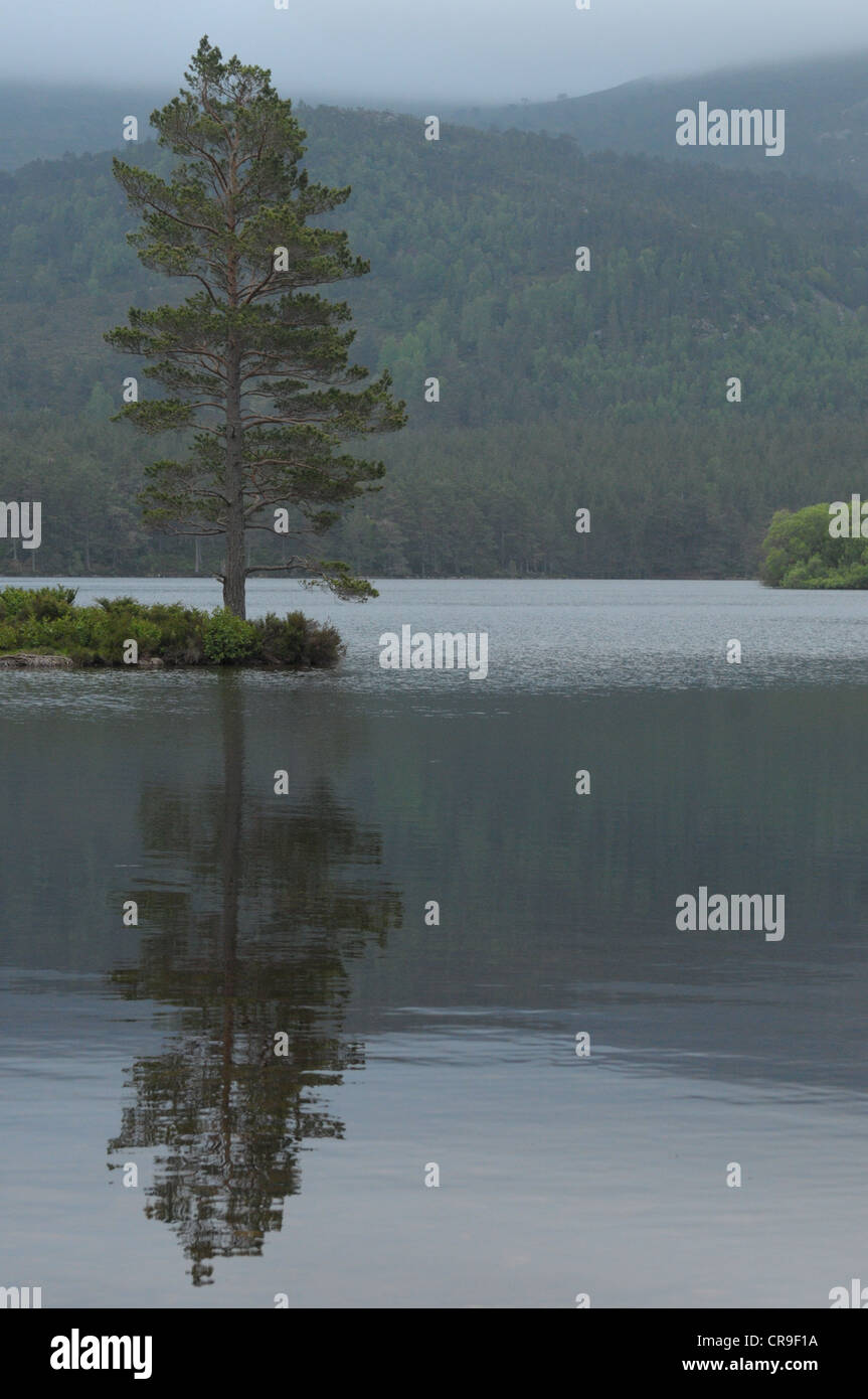 Reflection of a tree at Loch an Eilein, Scotland. - Stock Image