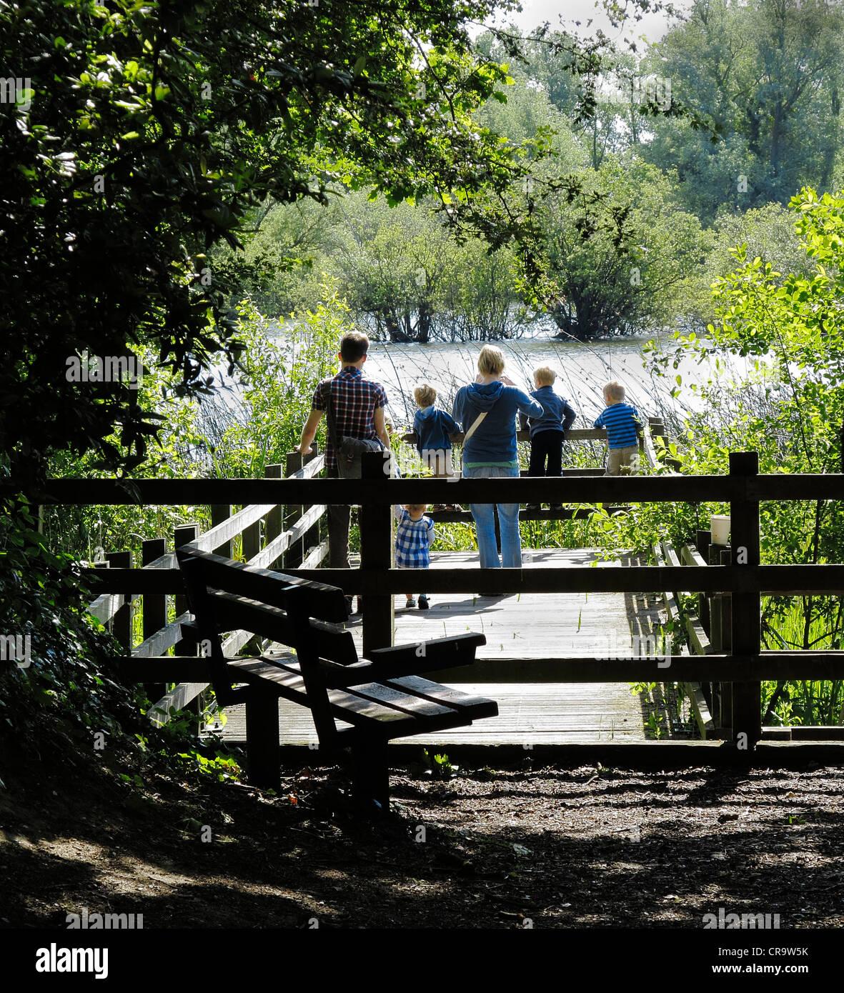 viewing-pier-at-milton-wildlife-park-cambridgeshire-CR9W5K.jpg