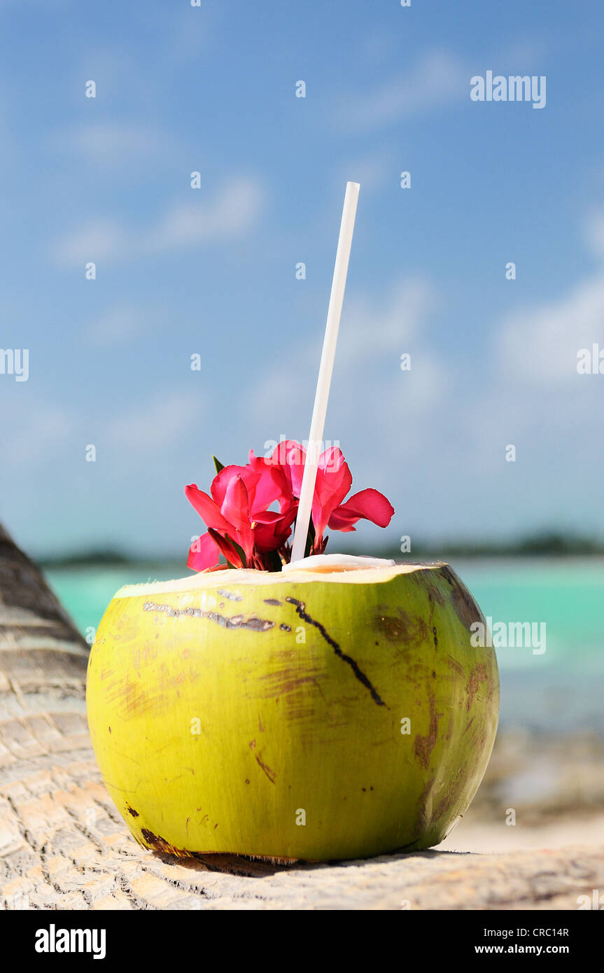 Coconut with drinking straw on a palm tree at the sea - Stock Image