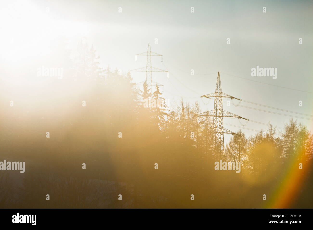 Telephone poles over trees - Stock Image