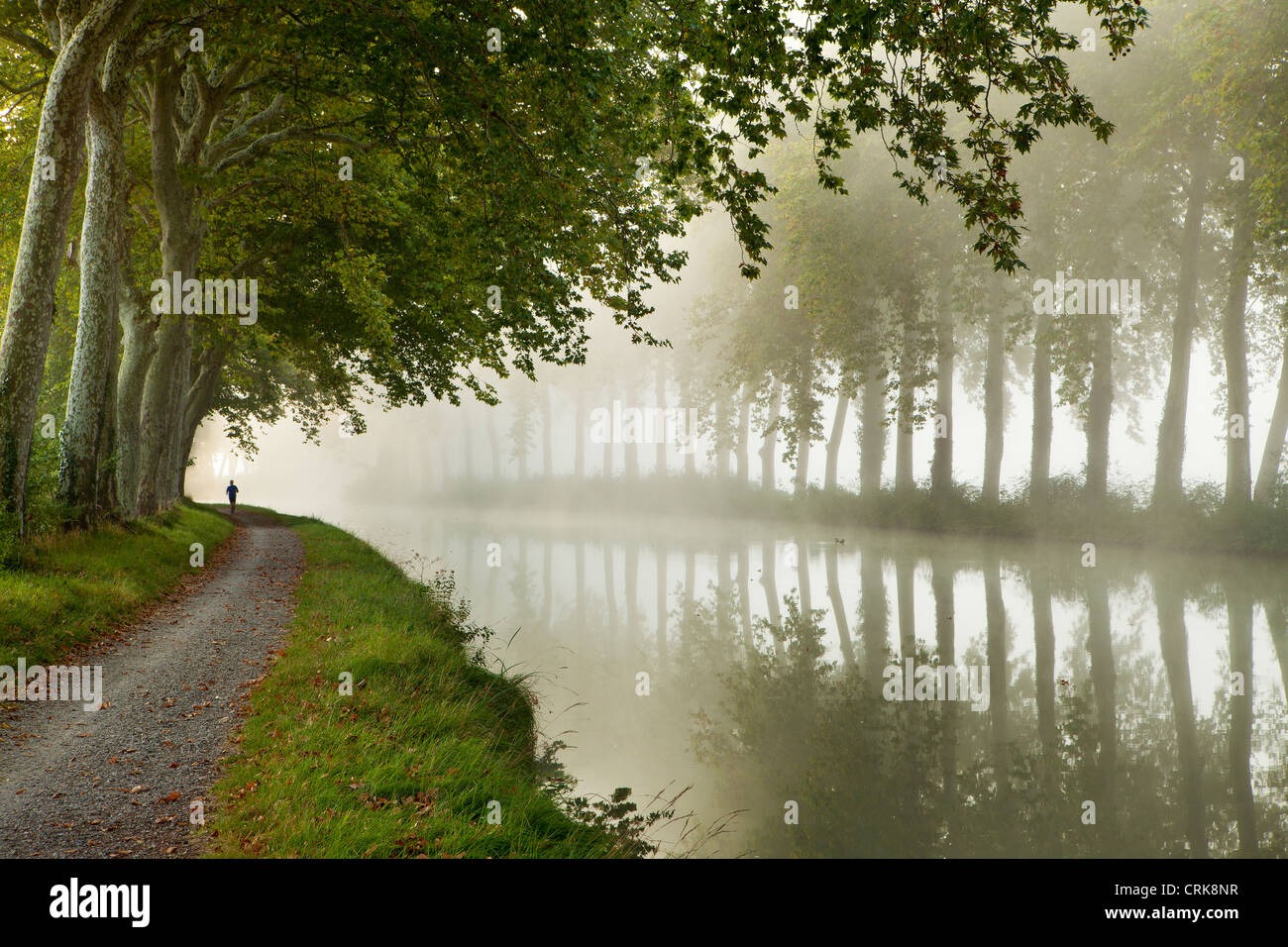 a jogger on the towpath of the Canal du Midi nr Castelnaudary, Languedoc-Rousillon, France - Stock Image