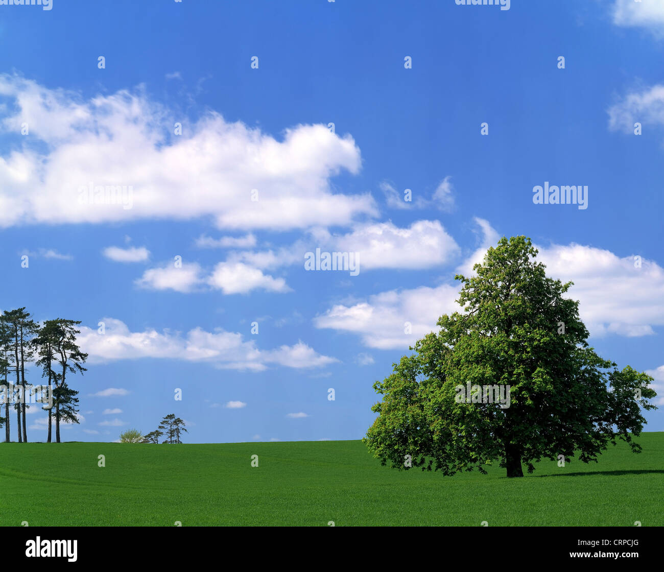A fertile field adorned with a scattering of trees in rural Shropshire. - Stock Image