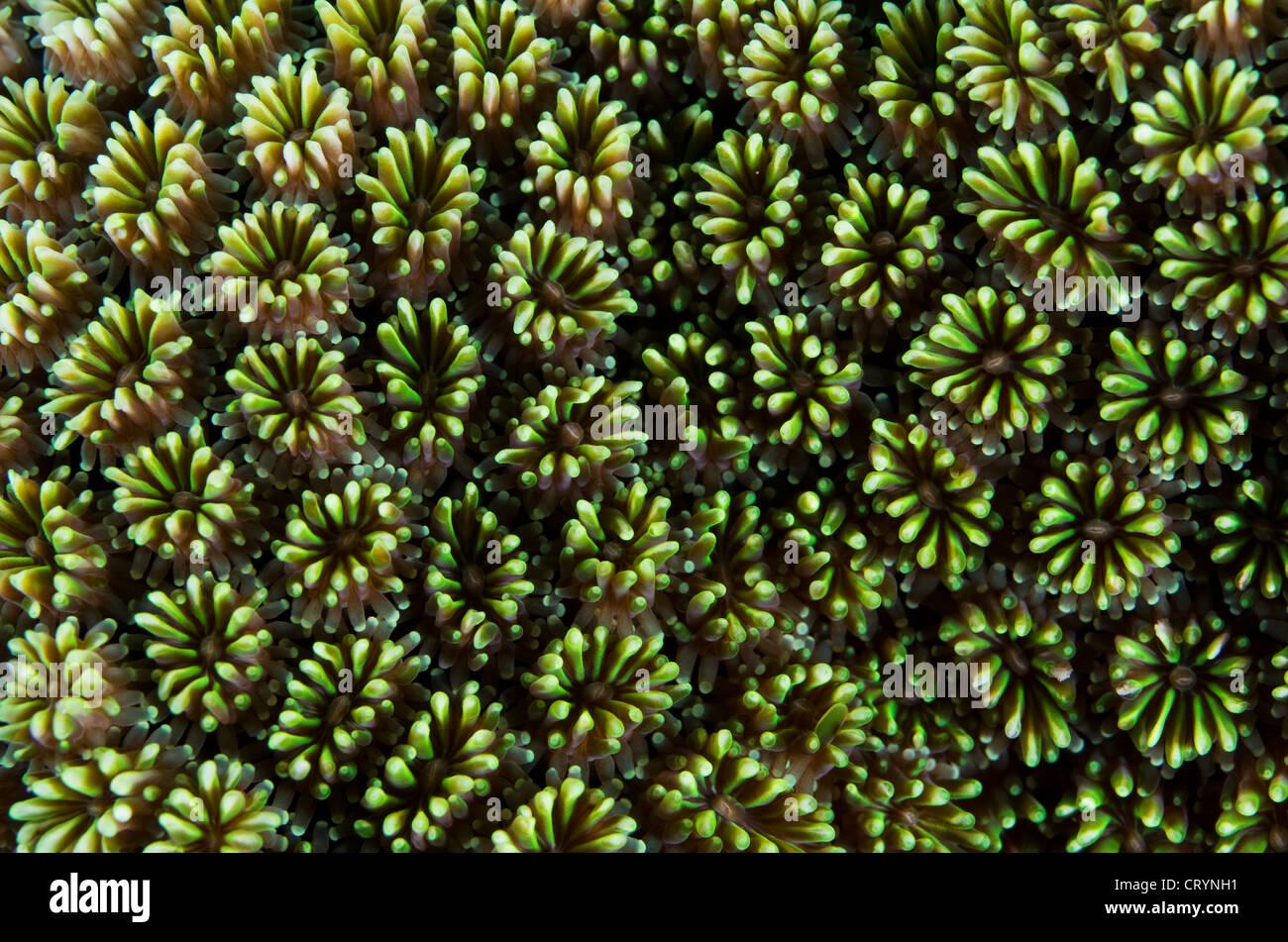 Coral reef, Okinawa, Japan - Stock Image