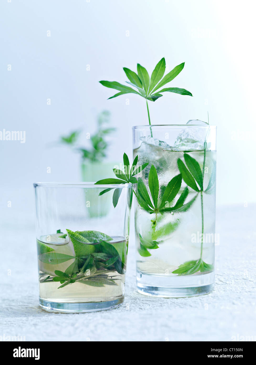 Herbs in glasses of water - Stock Image
