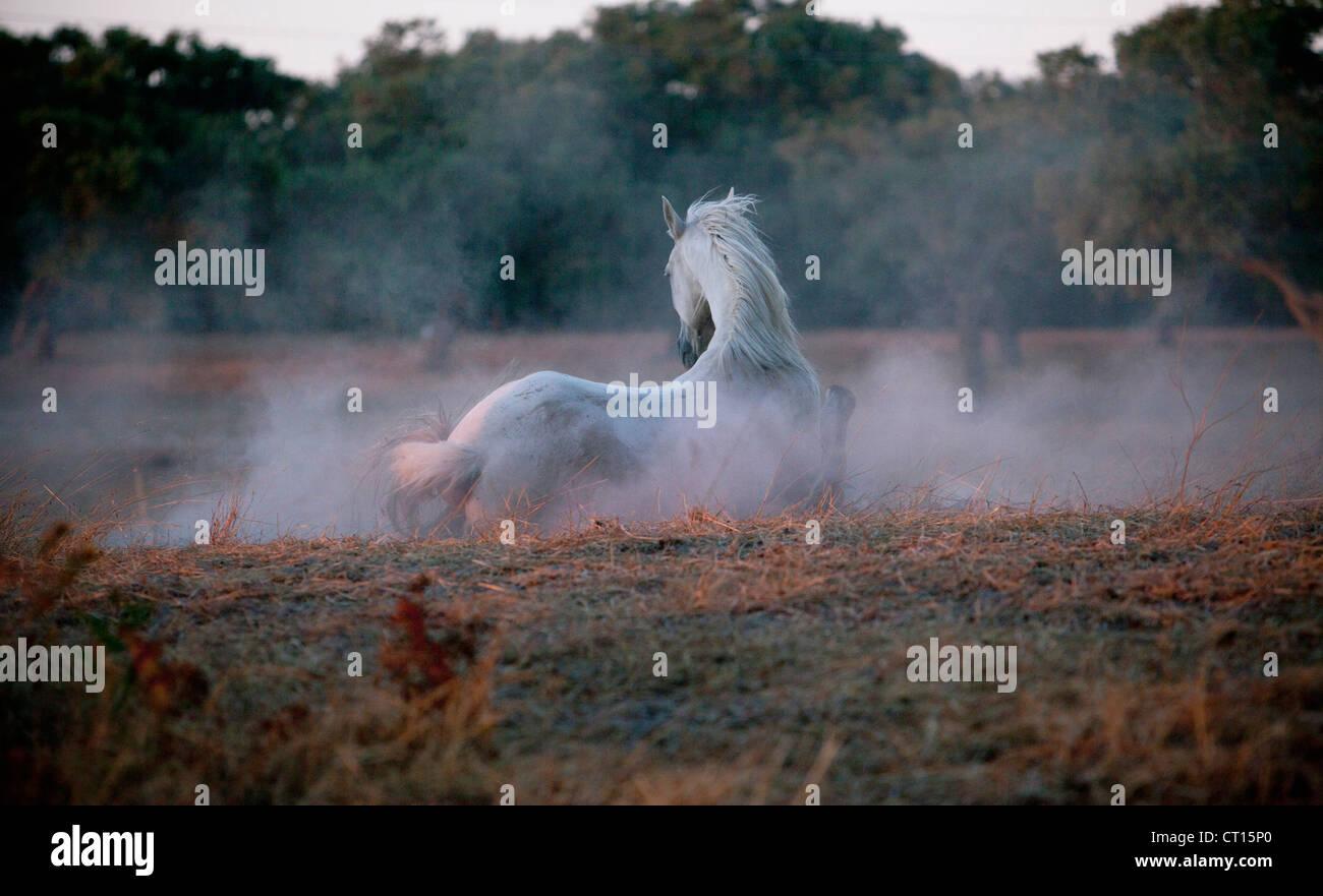 Horse walking in foggy field - Stock Image