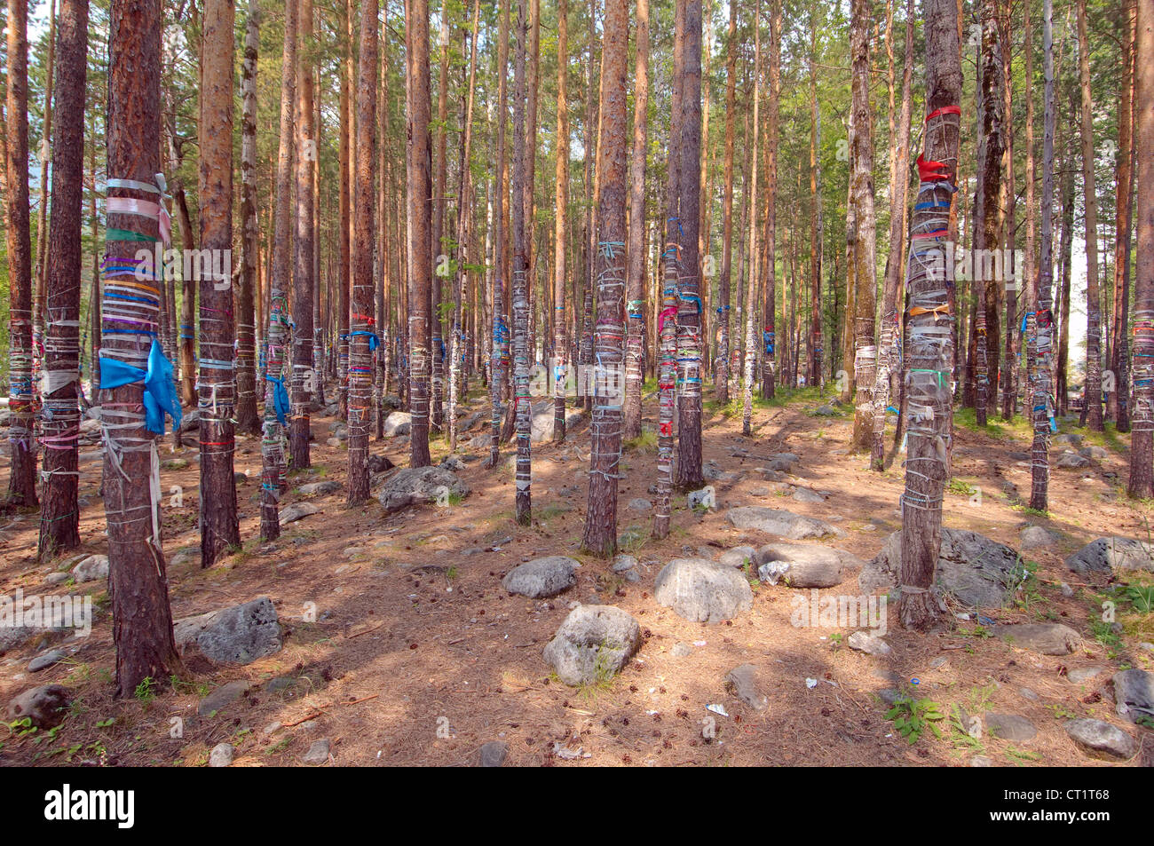 the sacred grove, Arshan, Tunkinsky District, Republic of Buryatia, Siberia, Russian Federation - Stock Image