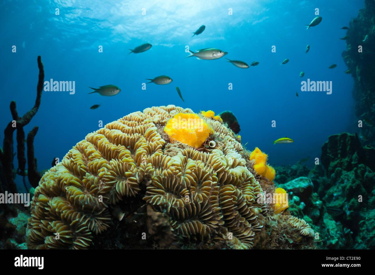 Caribbean Coral Reef, Caribbean Sea, Dominica - Stock Image