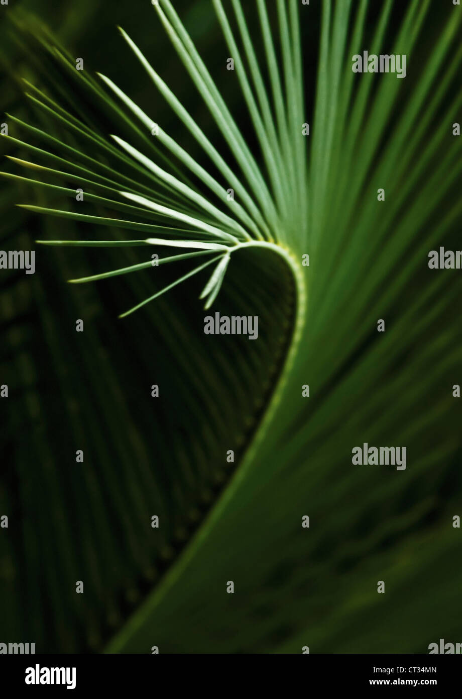 Palm - Stock Image