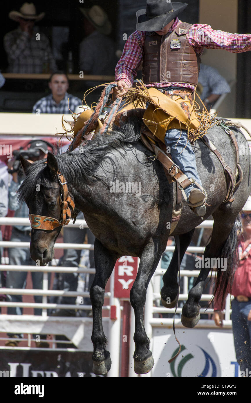 Saddle bronc event at the Calgary Stampede Rodeo Stock Photo