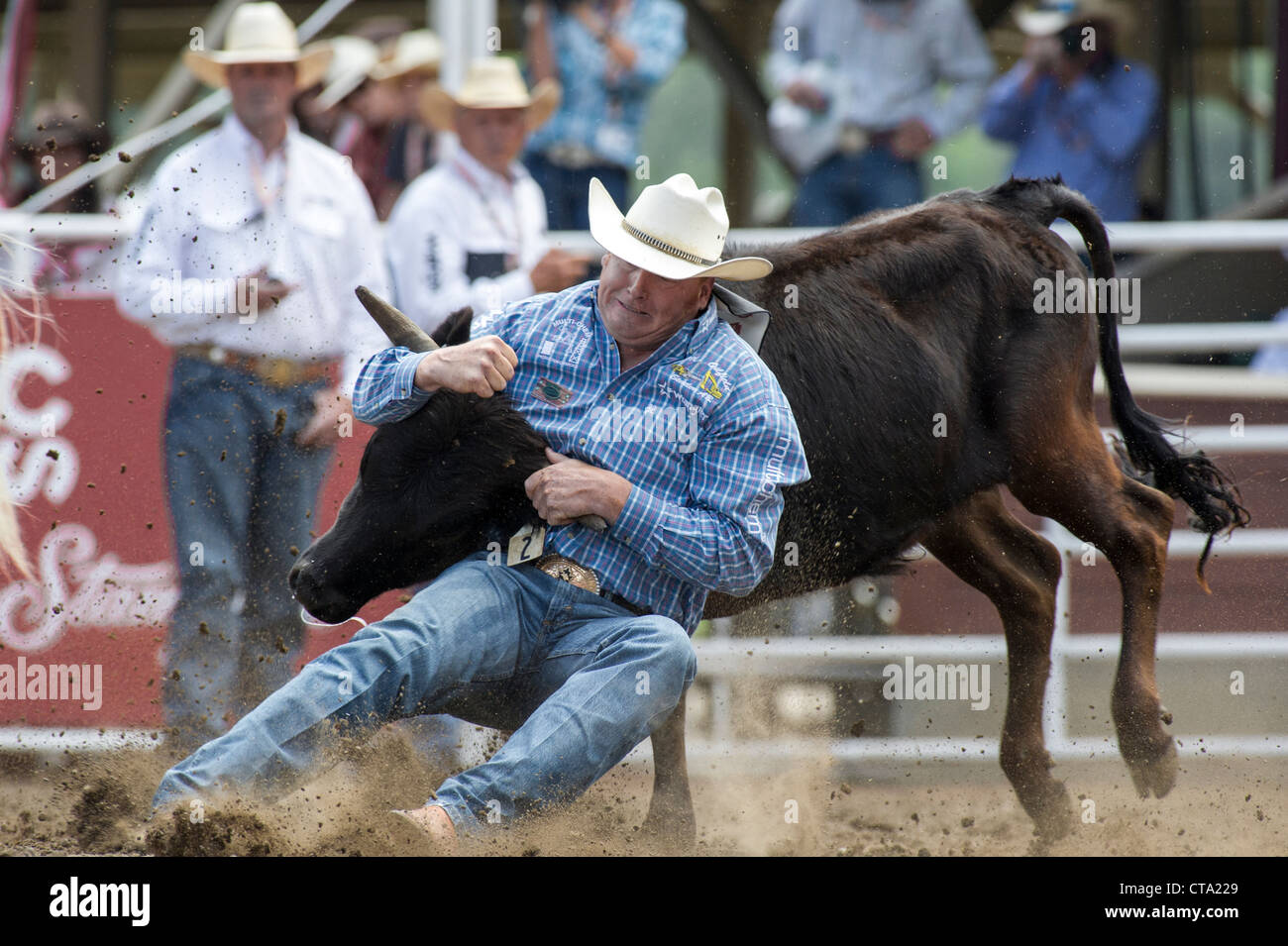 steer-wrestler-at-the-calgary-stampede-rodeo-CTA229.jpg