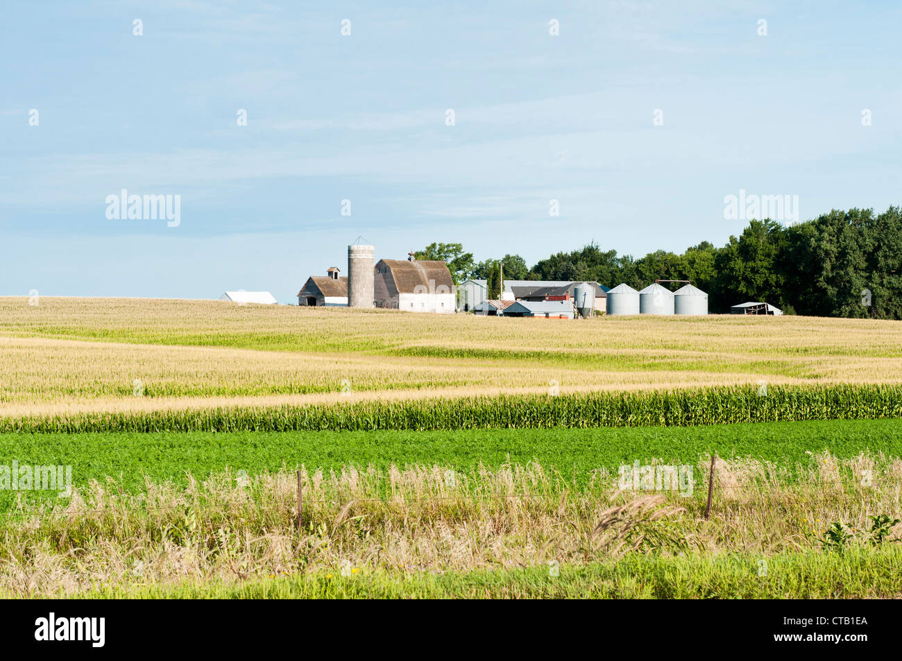 Farm buildings are shown with a corn field in the foreground. - Stock Image