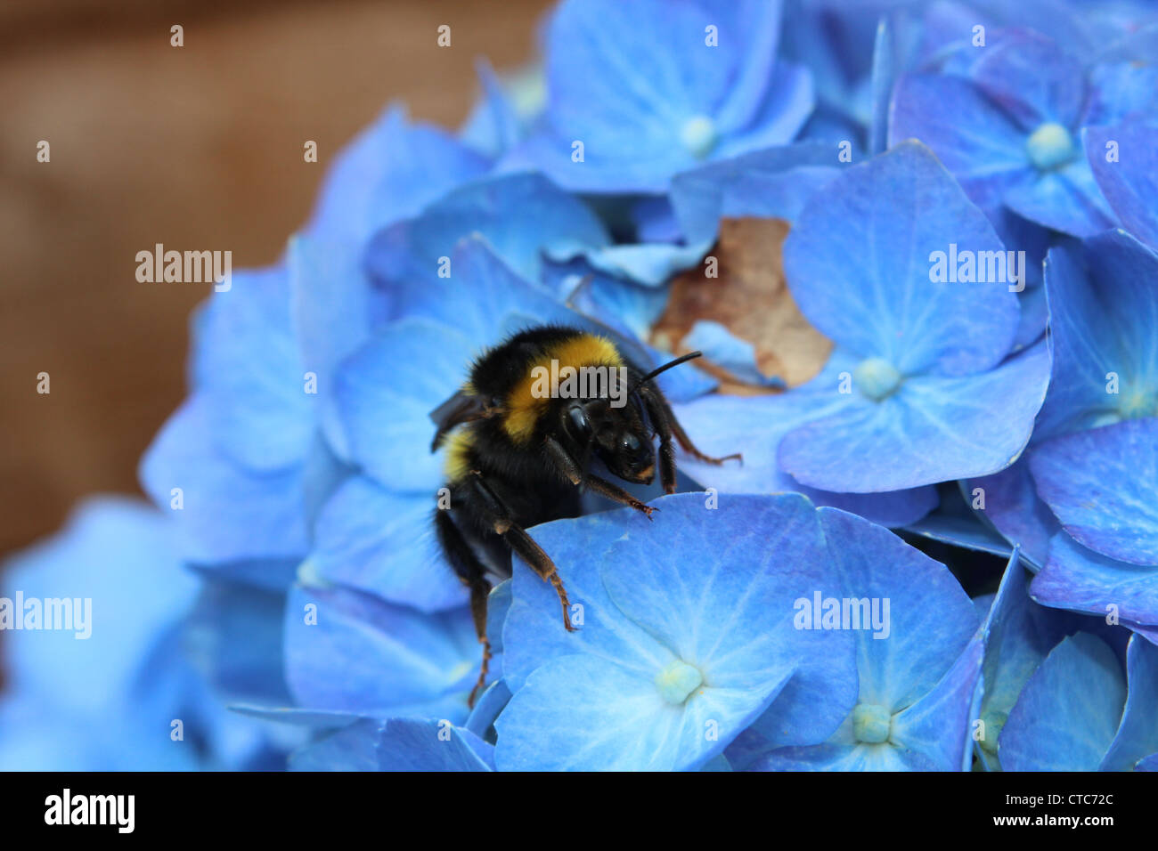 Bee happy. - Stock Image