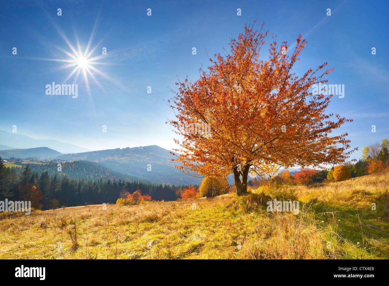 Autumn scene in Beskid Mountains, Poland - Stock Image