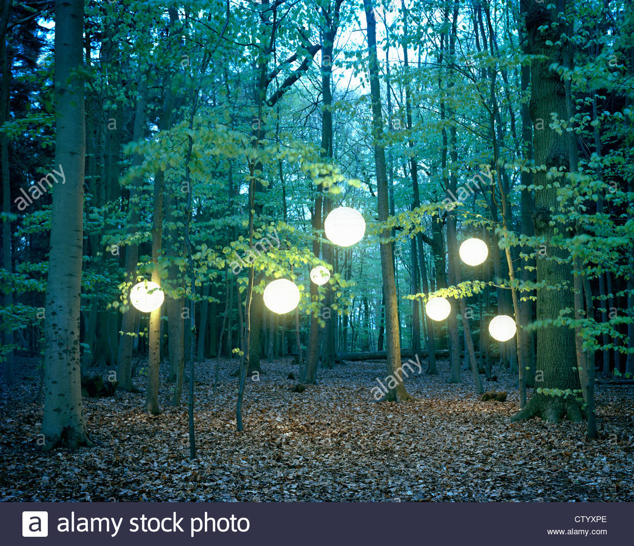 Lanterns hanging from trees in forest - Stock Image