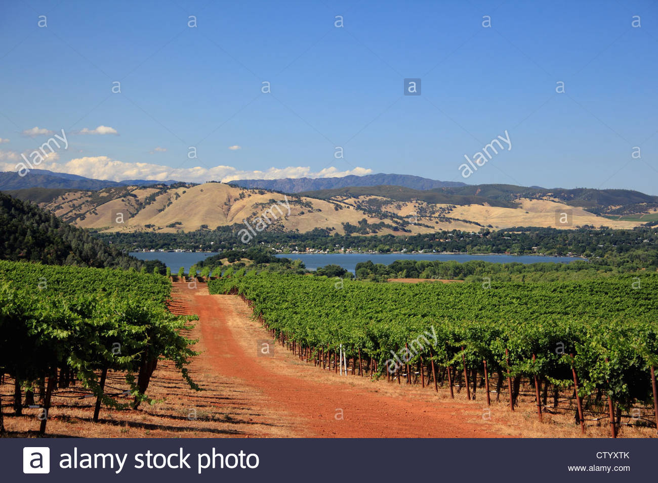 Dirt road in rural vineyard - Stock Image
