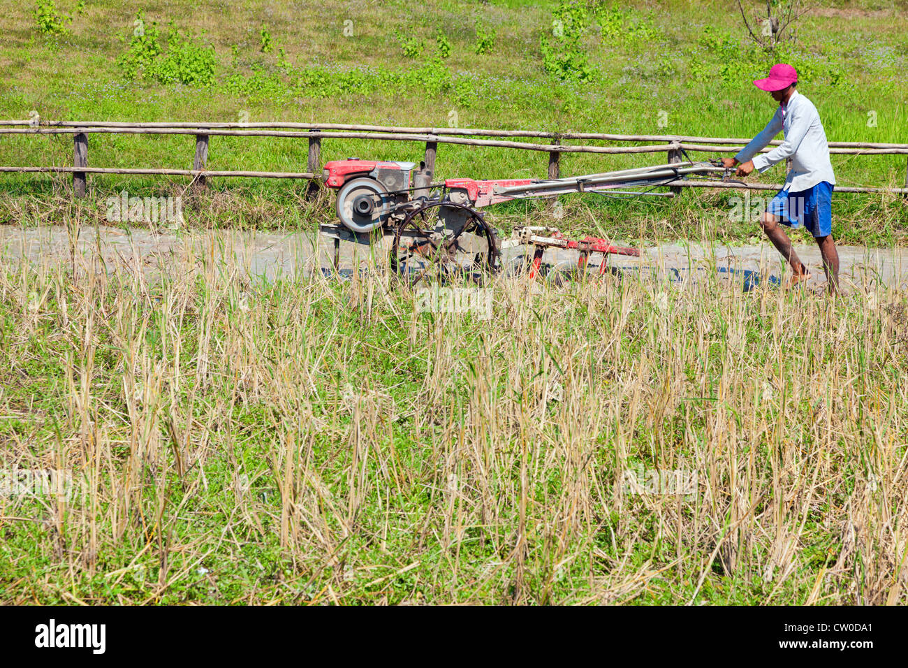 Cambodian farmer is plowing rice field - Stock Image
