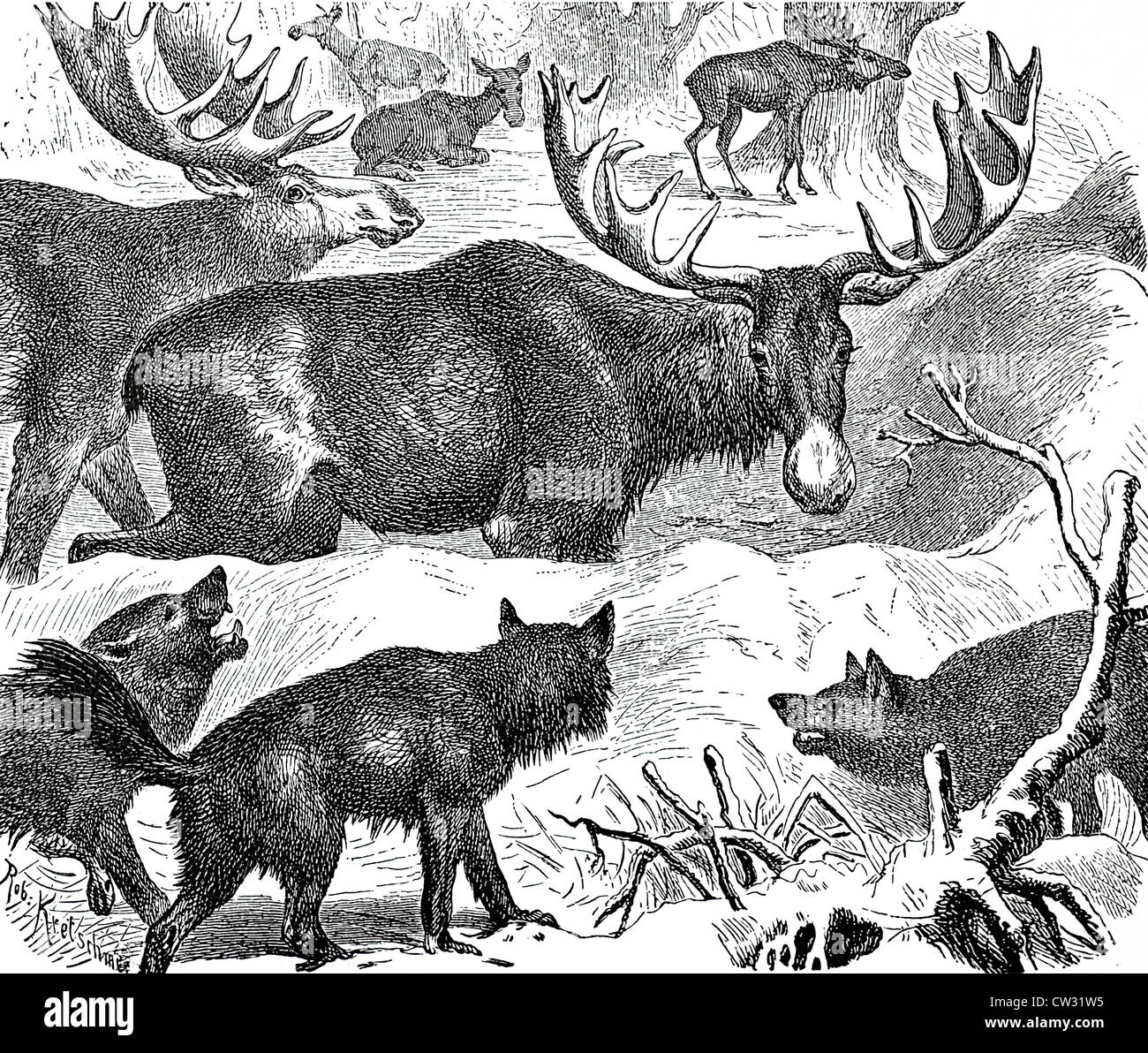 The moose in his castle - Stock Image