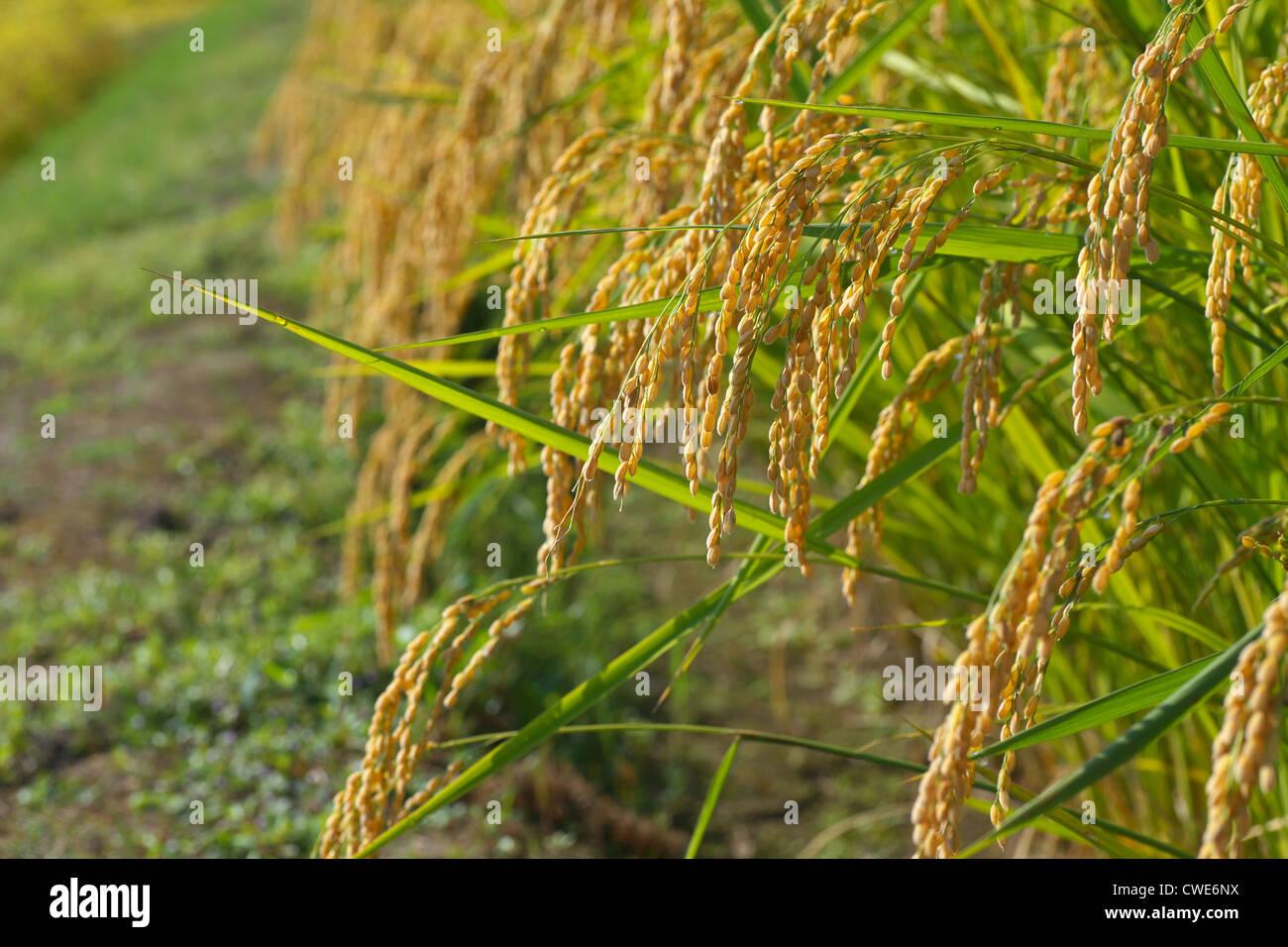 Cropland - Stock Image