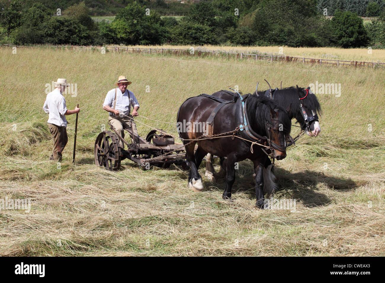 pair-of-horses-mowing-hay-beamish-museum