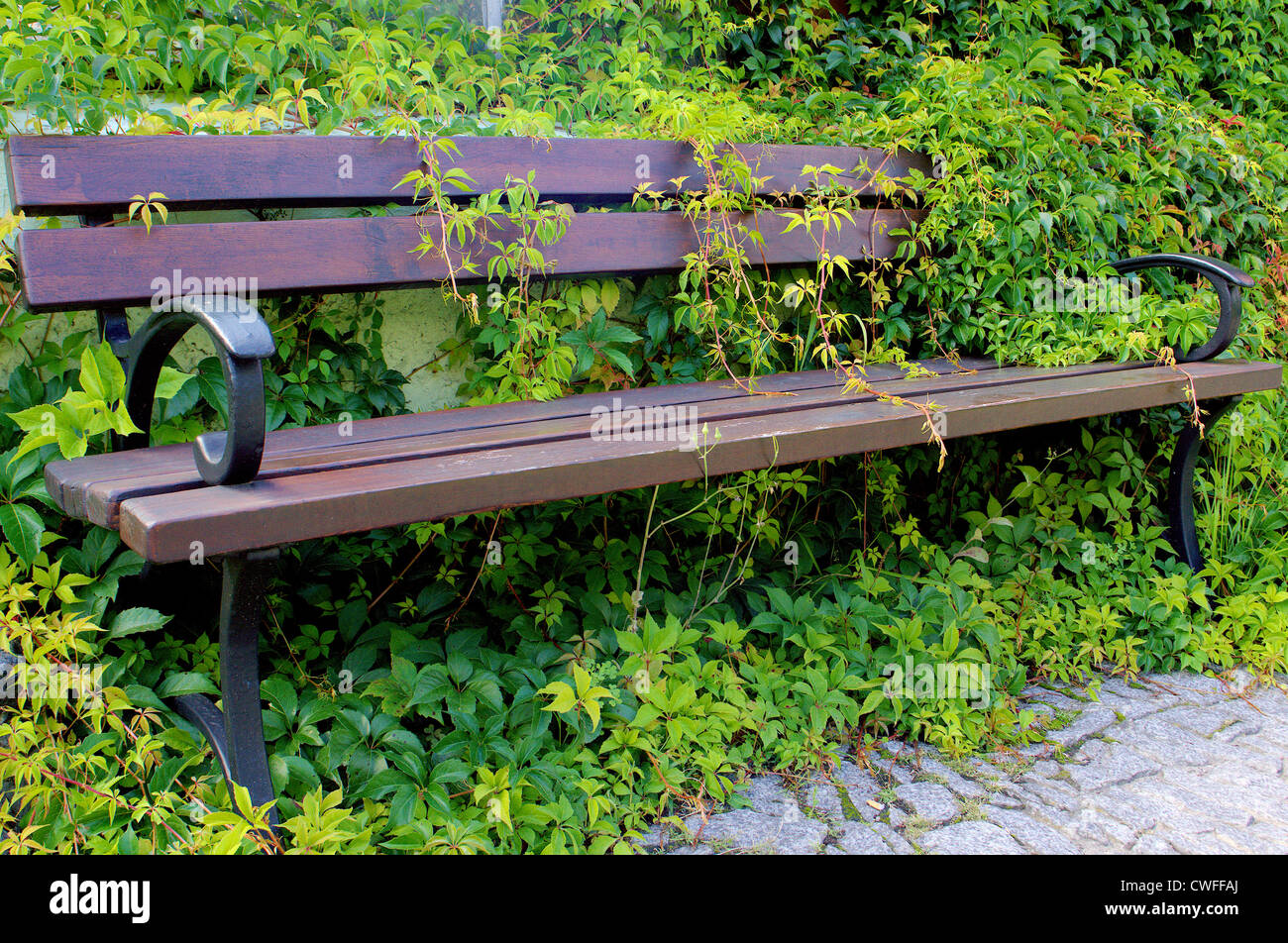The bench in the green creeper not haunted forgotten - Stock Image